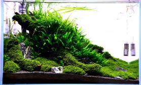 水草造景(60CM)小草缸鉴赏