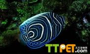 热带鱼品种大全