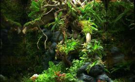 美丽的雨林缸水草缸一起欣赏