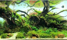 水草缸造景沉木水草泥化妆砂青龙石90CM尺寸设计94