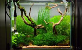 沉木青龙石水草造景45CM及以下尺寸设计24