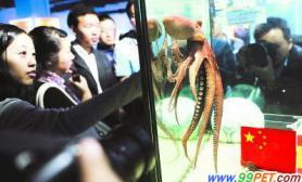 亚洲版章鱼哥现身海洋公园将预测亚运会(图)