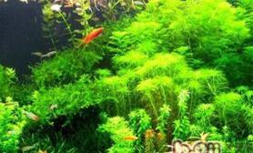 水草肥料三要素的作用