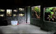 水族箱造景镶嵌在墙上的水陆缸水草缸够野味水草缸够劲爆鱼缸水族箱鱼缸水族箱