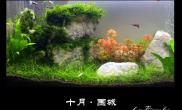 水草造景【千寻杯造景比赛+中缸组】:十月·围城