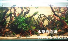 沈剑峰阴性草沉木景水草造景1图片5米的缸