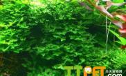 水草生长与肥料选择的关系