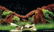最逼真水草造景展(四)水草缸最后的月光