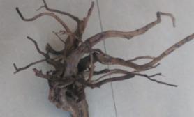 菜鸟求教沉木做树方法