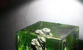 10cm微缸造景水草缸端的是精致