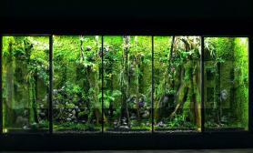 Greendeep精品雨林生态缸(SZ大型生态缸制作记录)