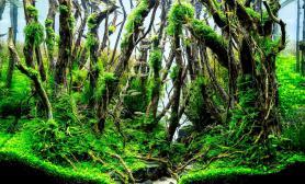 水草造景(60CM)鱼缸造景森林大作