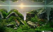 木化石小鱼缸造景石材