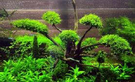 喜欢莫斯水草缸所以做了一些树的造景