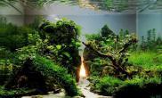 水草缸的黎明