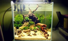 好久好久没来了水草缸献上最新30小缸造景---浅滩石木鱼缸水族箱鱼缸水族箱鱼缸水族箱