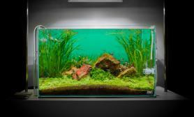 水草缸造景沉木水草泥化妆砂青龙石60CM尺寸设计44