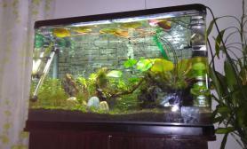 新手一枚水草缸大家看看水草缸提提意见鱼缸水族箱