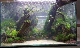 沉木水草造景(60CM)流木杜鹃根藤蔓