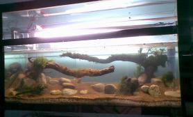 一年前的120缸沉木杜鹃根青龙石水草泥黑木蕨走起鱼缸水族箱大神轻拍沉木杜鹃根青龙石水草泥
