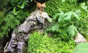 悦赏自然生态造景馆水陆缸案例北京
