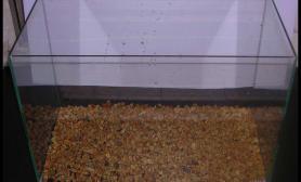 水溶MOSS水草敞口水陆缸