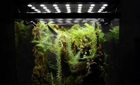 自然生态世界Greendeep精品雨林水陆生态缸