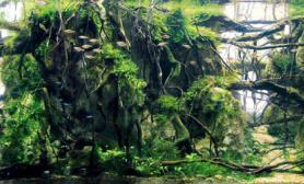 水草缸造景沉木水草泥化妆砂青龙石150CM及以上尺寸设计65