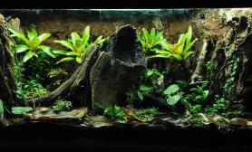 雨林生态缸大木头树桩造景个性