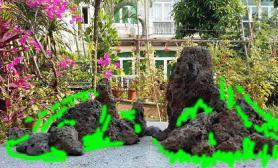 帮忙看看这个火山石景适合中什么草