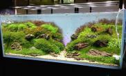 [转载]常见鱼缸造景方法