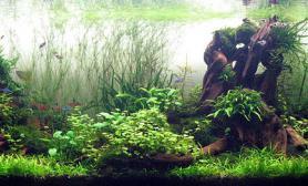 水草缸造景沉木水草泥化妆砂青龙石150CM及以上尺寸设计23