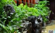 水草造景150水陆水草缸随意之作沉木杜鹃根青龙石水草泥