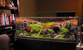 120CM荷兰式水草缸造景欣赏青龙石搭配