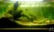 低成本水草缸自粘90鱼缸水草缸造景材料全部野采鱼缸水族箱