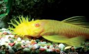 如何为观赏鱼排污换水