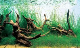 创意超白鱼缸水景造景欣赏