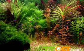 水草缸中如何布景