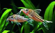 鱼类体型和水族造景的关系