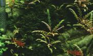 尚品水森林 -《spring》