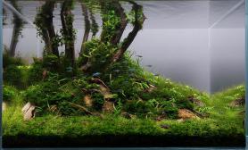 新手必读水草缸入门常见问题水草养殖和草缸维护