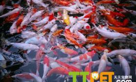 鱼缸水质酸碱度PH尺寸设计如何调节