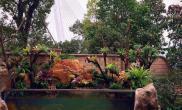 水草造景庭院中的雨林缸水草缸有点壕鱼缸水族箱
