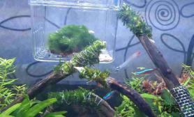 为嘛莫斯都不怎么长鱼缸水族箱水草也很少冒泡