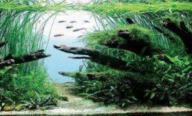 水族箱造景品评世界级的水草造景