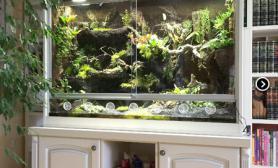 展示家居欣赏雨林生态缸作品