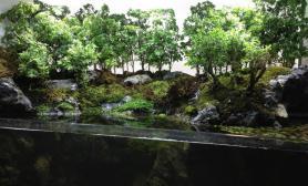 造景之路水草缸造景原生态鱼缸14