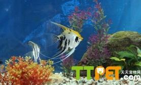 鱼类肠炎有哪些防治措施