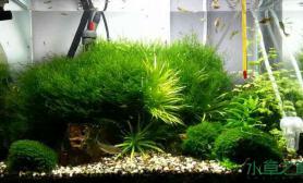 水草长得太快了水草缸调整了一下