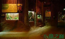 墙壁上的造景水草缸土生土长